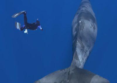 Le retour de Moby Dick