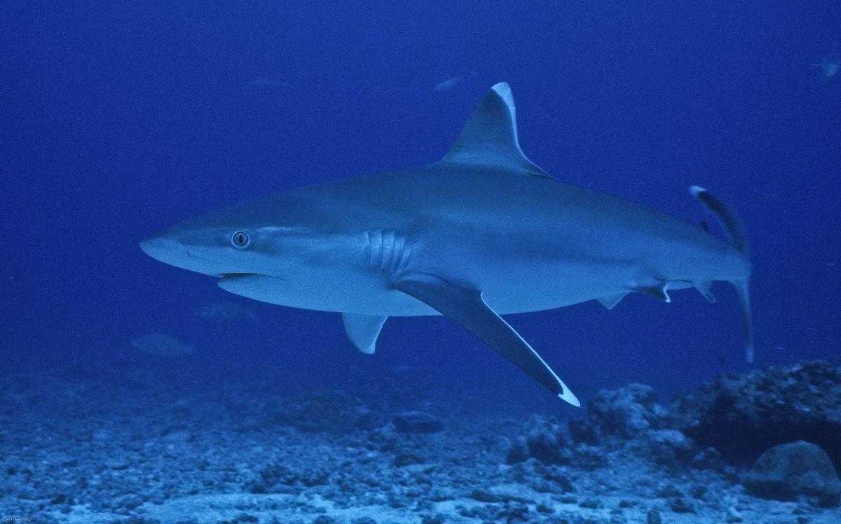 "Conférence ""Histoire de requins"" - Ocean academy"