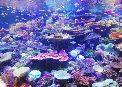 La belle vie sous l'eau