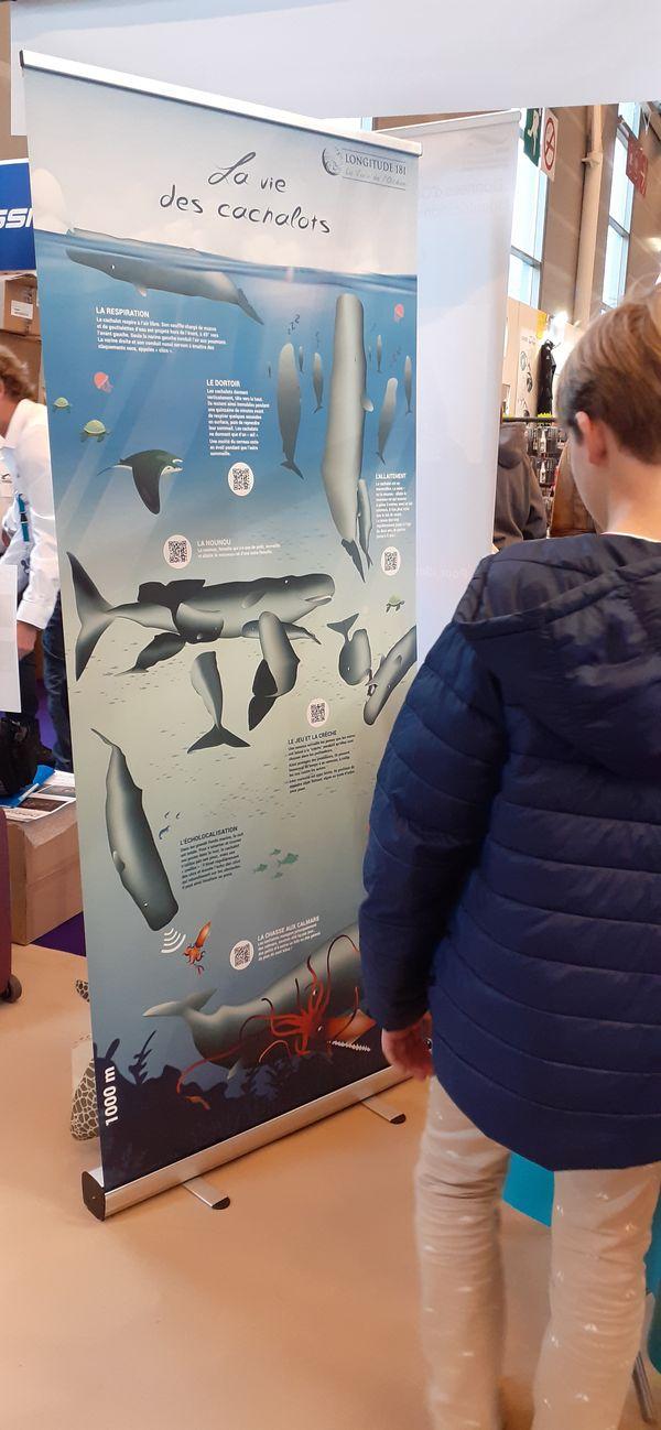Animation cachalots prévue au festival Scientilivres