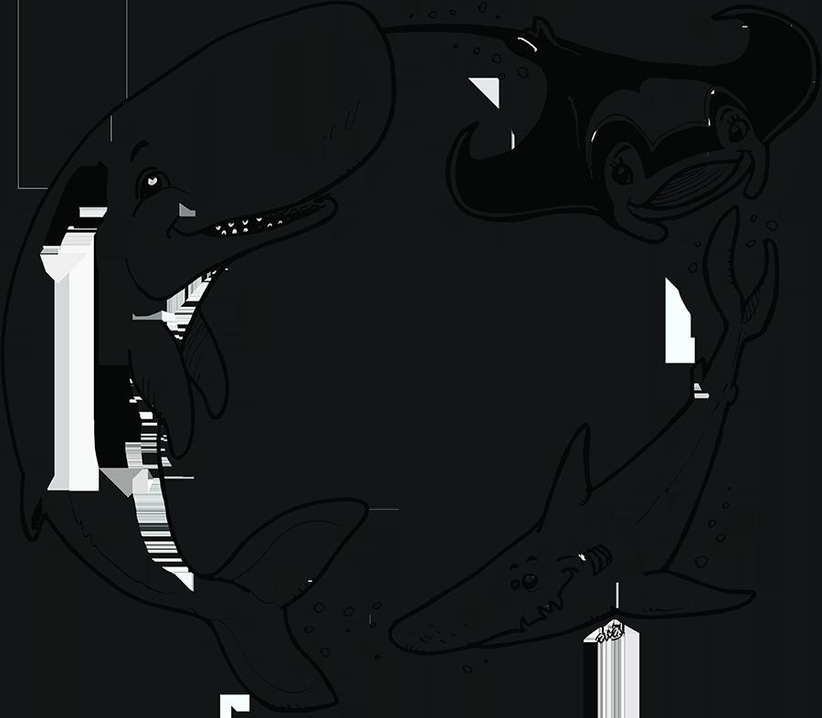 Cachalot Requin Raie Manta Ocean academy