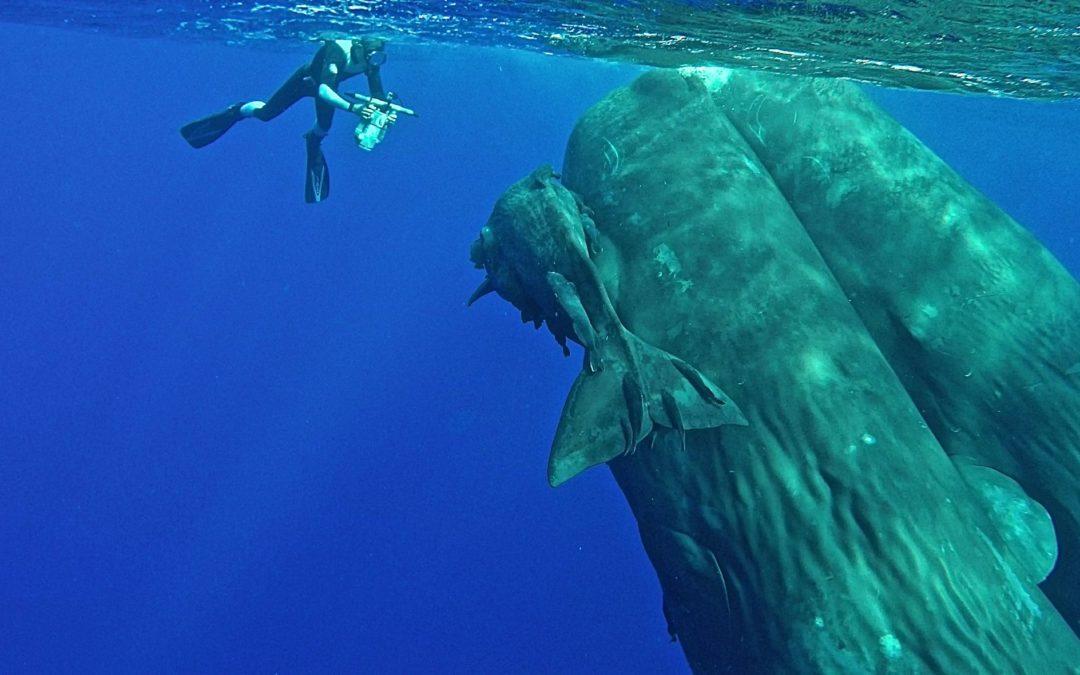 Ton logiciel Whale Sounds