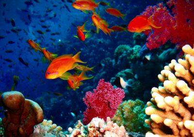 Les écosystèmes marins